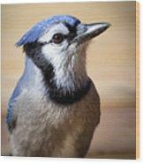 Blue Jay Portrait Wood Print