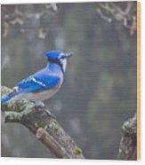 Blue Jay Song Wood Print