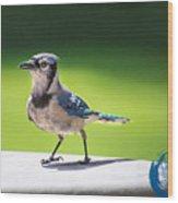 Blue Jay Walk Wood Print