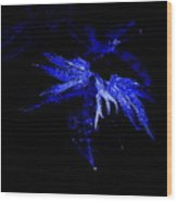 Blue Leaves Wood Print