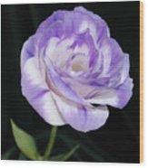 Blue Lisianthus Layered Loveliness II  Wood Print