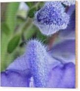 Blue Lupine Flower 1 Of 5 Shots Wood Print