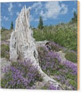 Blue Lupine Wood Print