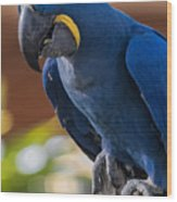 Blue Macaw Wood Print