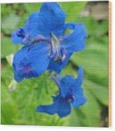 Blue Majestu Wood Print