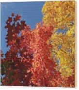 Blue Maple Wood Print