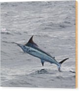 Blue Marlin At Oregon Inlet North Carolina Wood Print