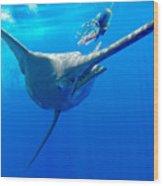 Blue Marlin Magic Wood Print