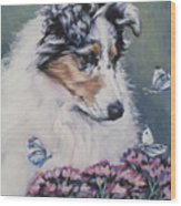 Blue Merle Collie Pup Wood Print