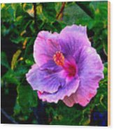 Blue Moon Hibiscus Wood Print
