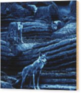 Blue Moon Wolf Pack Wood Print