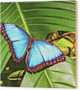 Blue Morpho Butterfly 2 - Paint Wood Print