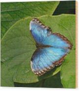 Blue Morpho Butterfly II Wood Print