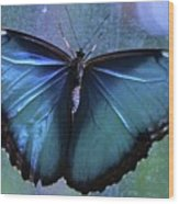 Blue Morpho Butterfly Portrait Wood Print
