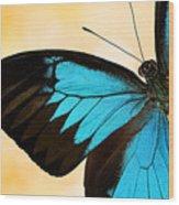 Blue Morpho Closeup Wood Print