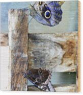 Blue Moths Wood Print