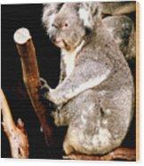 Blue Mountains Koala Wood Print by Darren Stein