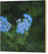 Blue Native Bloom Wood Print