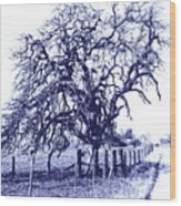 Blue Oak Wood Print