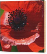 Blue On Red Poppy Wood Print