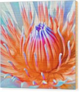 Blue Orange Lily Wood Print