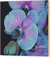 Blue Orchid On Black Wood Print