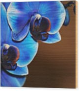 Blue Orchids Wood Print