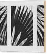 Blue Palma Triptych Wood Print