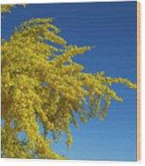Blue Palo Verde Tree-signed-#2343 Wood Print