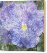 Blue Pansies Wood Print