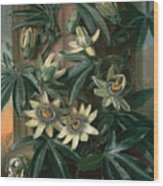 Blue Passion Flower For The  Temple Of Flora By Robert Thornton Wood Print