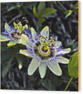 Blue Passion Flower Wood Print