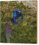 Blue Poison Arrow Frog Wood Print