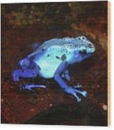 Blue Poison Dart Frog - Dendrobates Azureus Wood Print