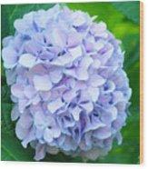 Blue Purple Hydrandea Floral Art Botanical Prints Canvas Wood Print