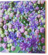 Blue Purple Hydrangea Flower Macro Art Wood Print