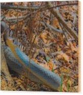 Blue Racer Wood Print