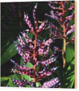Blue Rain Bromeliad Wood Print
