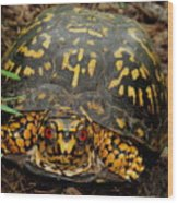 Blue Ridge Box Turtle Wood Print