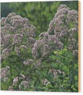 Blue Ridge Flowers Wood Print
