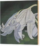 Blue Ridge Lilly Wood Print