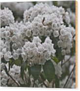 Blue Ridge Mountain Laurel Wood Print