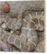 Montreat Water Snake Wood Print