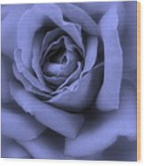 Blue Rose Abstract Wood Print