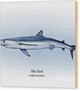 Blue Shark  Wood Print