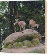 Blue Sheep Wood Print