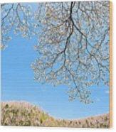 Blue Skies And Dogwood Wood Print