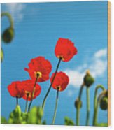 Blue Sky And Poppies Wood Print