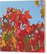 Blue Sky Autumn Art Prints Colorful Fall Tree Leaves Baslee Wood Print