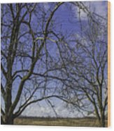 Blue Sky December Wood Print